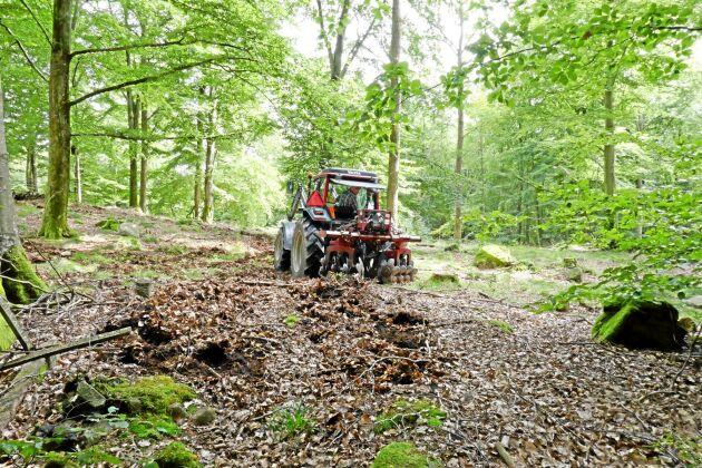 Markberedning kan ske på lite olika sätt. Här är det en vanlig jordbrukstraktor med ett grovt tallrinksredskap som markbereder jorden i bokskogen.
