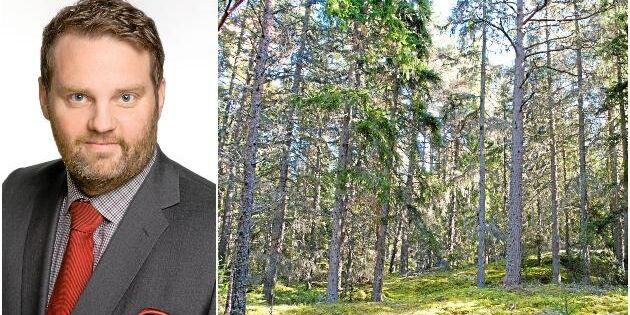 """Uppåt för skog efter AMF-affär: """"Spännande"""""""