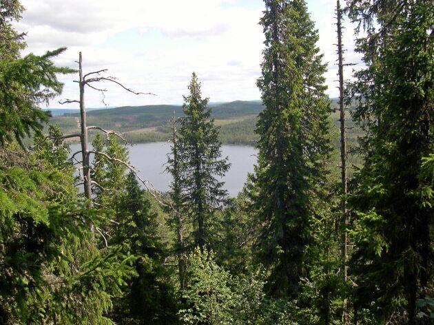 Sveaskog borde samla förvaltningen av ekoparker och naturvårdsskogar i en egen avdelning, menar debattörerna.
