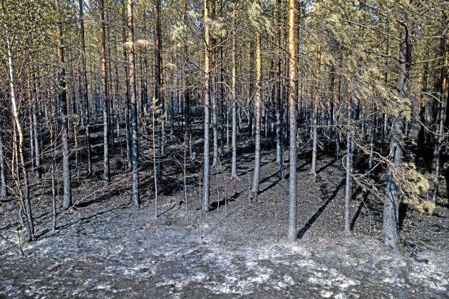 Bränd skog.