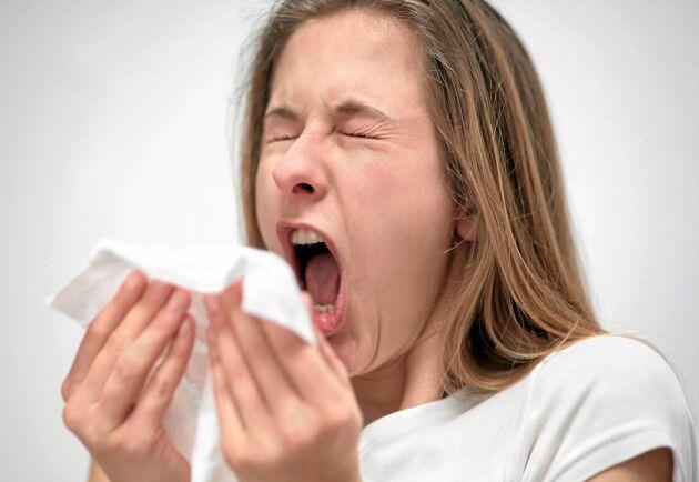 Symtomen vid pollenallergi och Covid-19 är likartade men skiljer sig ändå åt på flera punkter. Här får du koll.