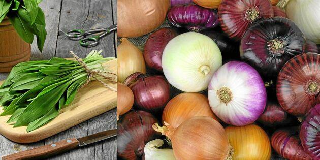 10 löksorter som lyfter din matlagning – så använder du dem!