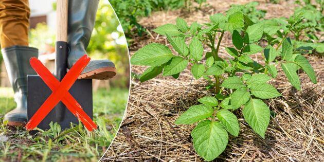 Släng spaden! Här är 5 lata sätt att odla potatis på