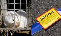 Ledare för djurrättsgrupp åtalas