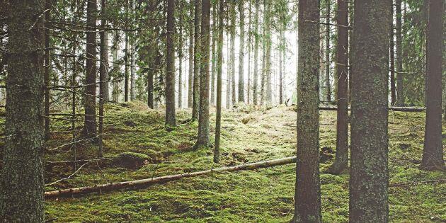 """Spaning 2018: """"Allt fler ser mjuka värden i sin skog"""""""