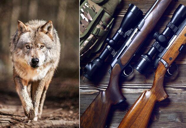 Företagsledaren vill ha tillbaka sina vapen som beslagtogs i samband med utredningen om misstanke om jaktbrott. (Arkivbild)