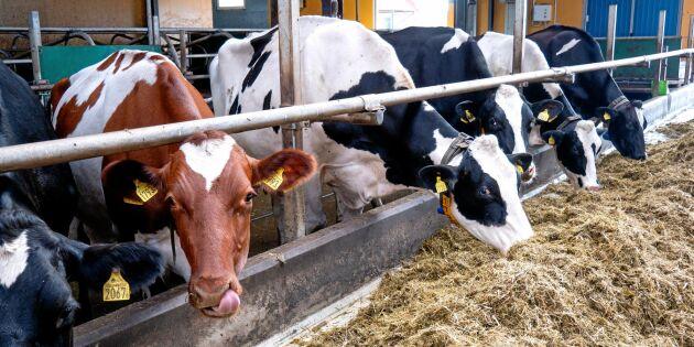 """""""Glöm inte de goda effekterna av mjölkproduktion"""""""