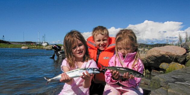 Följ med på makrillfiske på västkusten - och lär dig alla fiskeknepen!