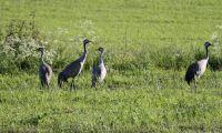 Nya regler om jakttider kan minska viltskador