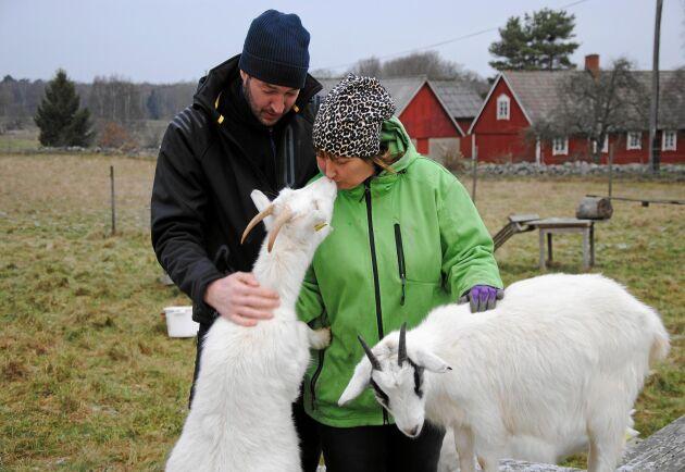 PUSS PÅ DIG. Av getternas mjölk gör Henrik Mårtensson och Victoria Mårtensson Winberg från Glada geten gårdsmejeri bland annat färskost, blåmögelost och hårdost.