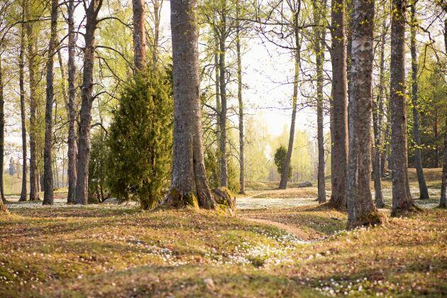 På Hammarö finns många strövområden och vattennära vandringsleder.