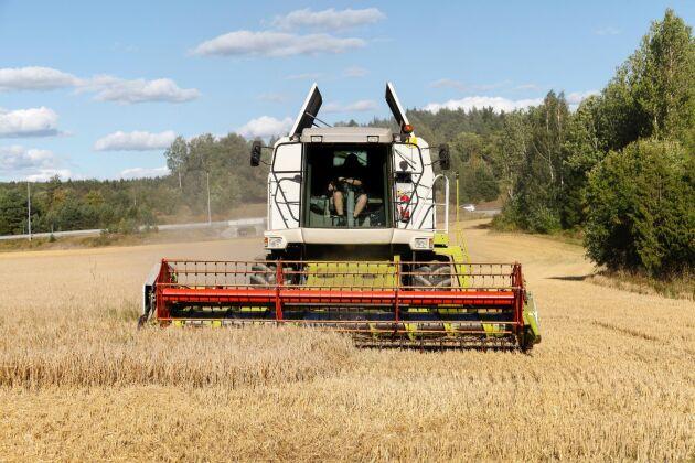 Svenska kvarnföreningen uppskattar ett skördebortfall på 30-50 procent i höstvetet mot normalt på de arealer som är tröskade i södra Sverige.