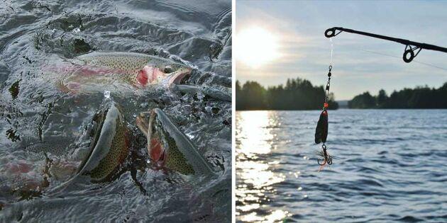 Tusentals fiskar på rymmen – folk uppmanas fiska upp dem