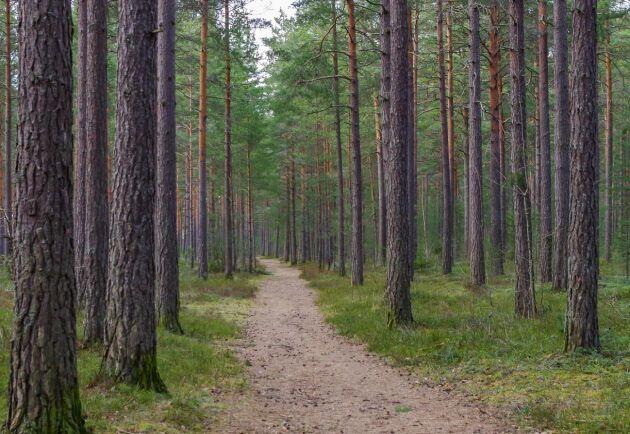 Regeringen och LRF måste agera för att bevara bestämmanderätten över skogen.