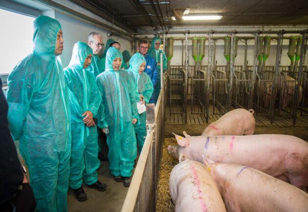 Mattias Espert visar upp sin grisproduktion för en delegation från Kina 2018.