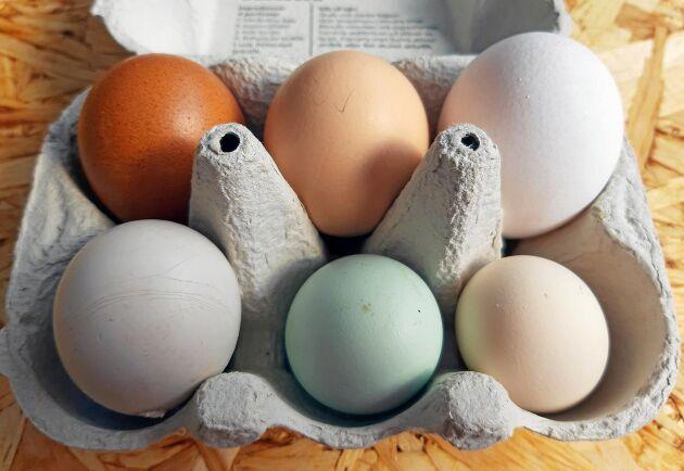 Ägg i blandade färger - perfekt gå-bort-present.