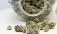 Köar för att få odla cannabis
