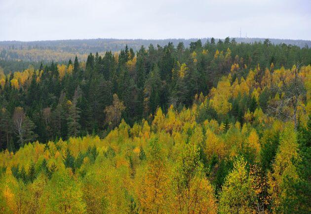 Ekoparker bidrar till att värna skogens mångfald.
