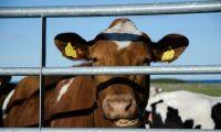 Sverige stöds för regelverk kring djurtransporter