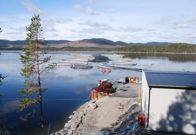 Kassodling på Vattudalens Fisk i Strömsund där SLU driver projekt för en miljövänligare fiskodling.