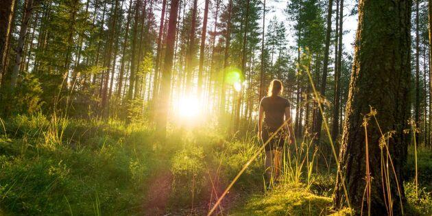 Avslutad: Vad kan du om skogen?