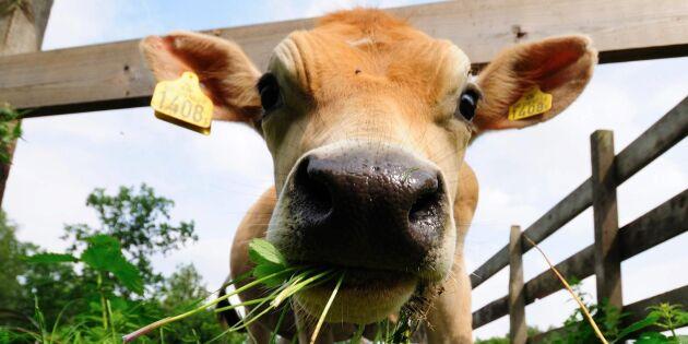 Så stöttar du svenska bönder efter torkan – 5 enkla & smarta val
