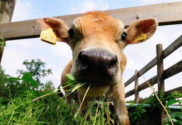 Sveriges bönder behöver fortfarande din hjälp efter den svåra sommartorkan 2018.