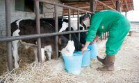 Pressat mjölkpris utmaning för drabbade bönder