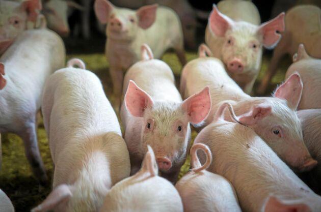 Svenska djuruppfödare har tagit sitt samhällsansvar, menar Lena Johansson i sin ledare.