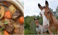 Här är köttproducentens egna recept på hästkött