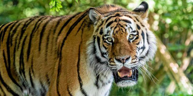 Frösö Zoo stängs för gott – 700 djur måste flyttas till nya hem