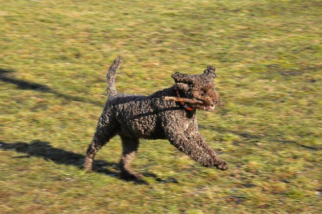 Promenader och lek med en pinne kan vara väl så viktig i pedagogiken som innefattar en hund.