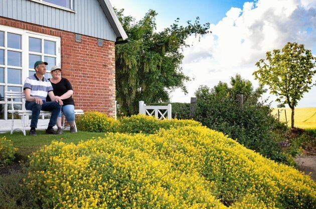 Inte så märkvärdig på egen hand, men om den lilla nunneörten får breda ut sig bildar den snart en blommande, gul matta av blommor – som runt uteplatsen mot öster.