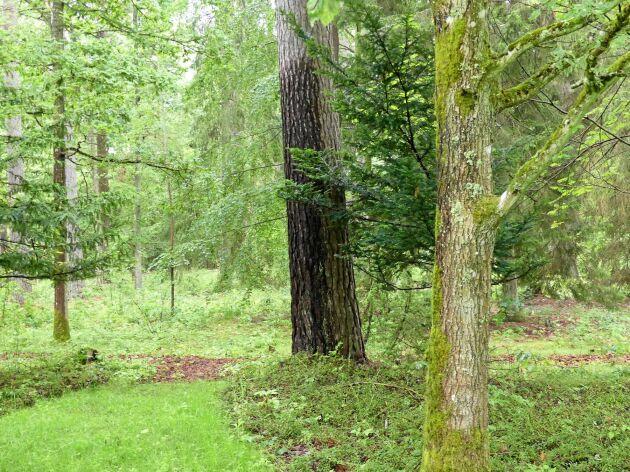 Den första gravsättningen är gjord och den är skapad för miljöns bästa.