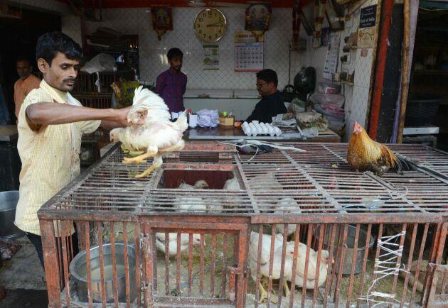 En försäljare på en kycklingmarknad i den indiska staden Siliguri den 6 mars.