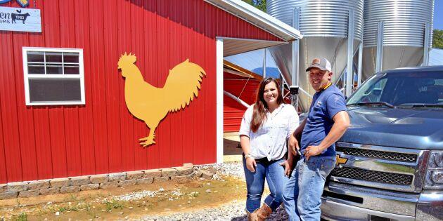 Kycklingproduktion med öppna dörrar