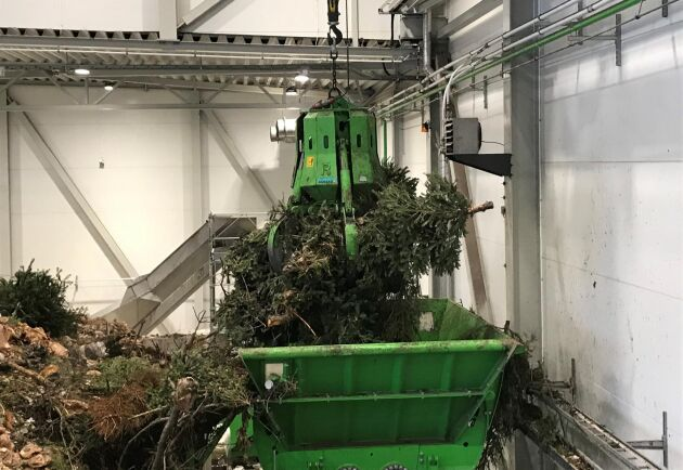 I Jönköping rötas julgranar tillsammans med matavfall till fordonsgas.