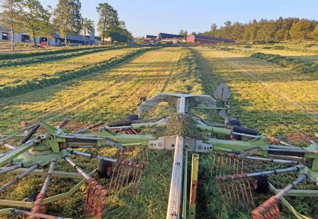 Ett av de tre bästa åren hittills – så beskriver Henrik Svensson på Labbarps gård resultatet för vallen.