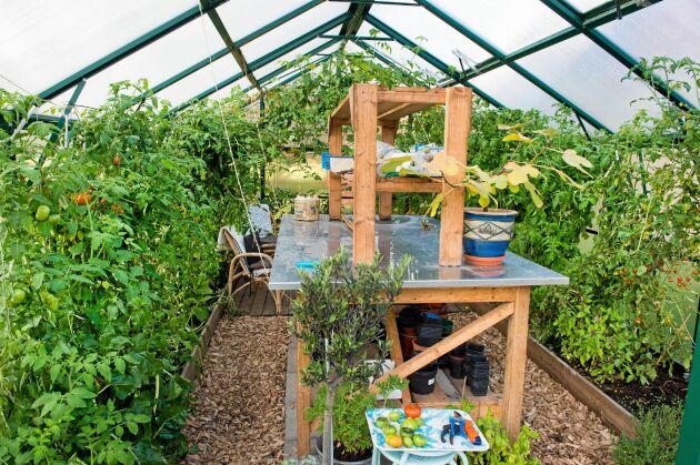 Växthuset bjuder bland annat på tomater för den som vill smaka.