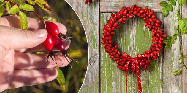 Gör finaste kransen av gladröda nypon – i tre enkla steg