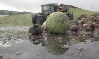 Biogasstöd välkomnas av branschen