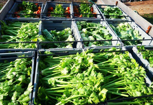 En dag i veckan kommer andelsägarna för att hämta grönsakerna som skördas en gång i veckan. På så sätt lär de sig hur den svenska odlingssäsongen ser ut.