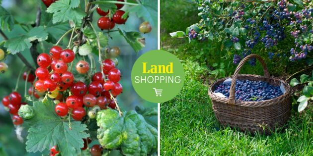 Upptäck hela sortimentet av växter på Landshopping