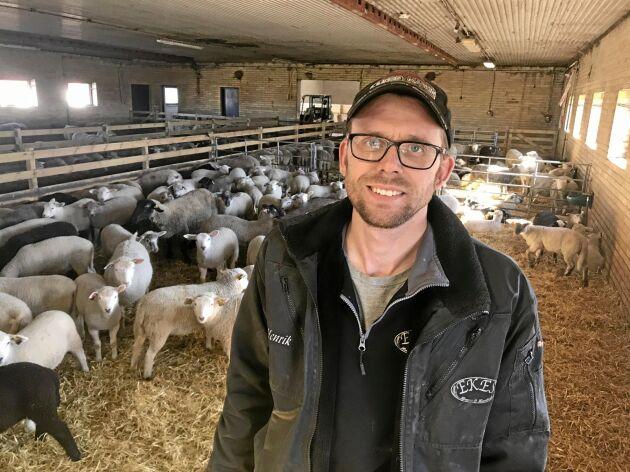 Henrik Andersson på Ekes Lamm och Lantbruk har nya lamm i stallen på före detta Tangará Farm i Hörby.