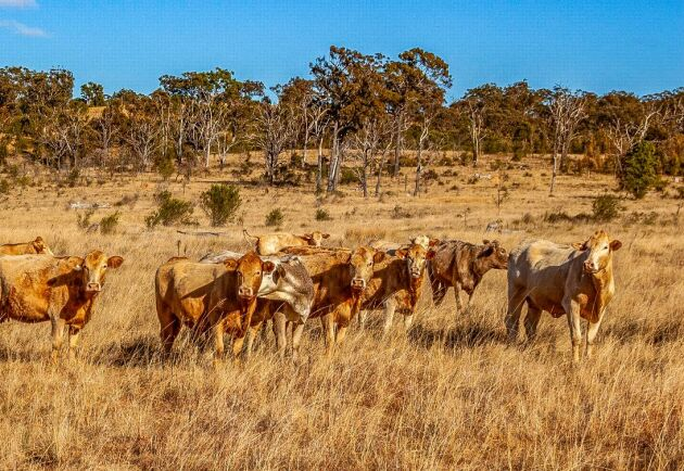 Charlois-korsningar i Queensland, Australien.