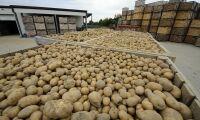 Kartoffel-kartell får dryga böter