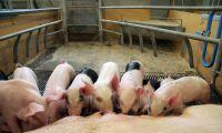 Vill exportera svensk antibiotikasuccé