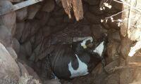 Kviga räddades – fick lyftas ur brunnen i huvudet