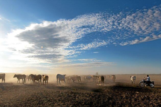 Boskapsfarmen Kidman i Australien uppges vara världens största privatägda jordbruk.