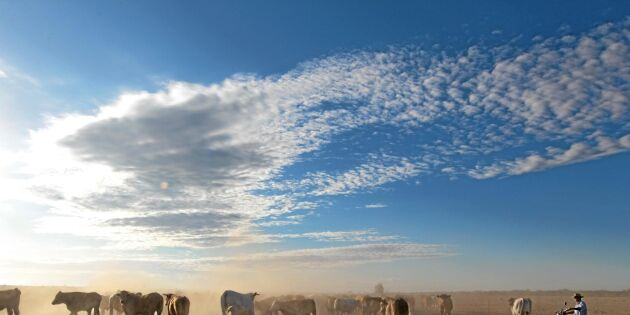 Australiens rikaste kvinna köper jättefarmen